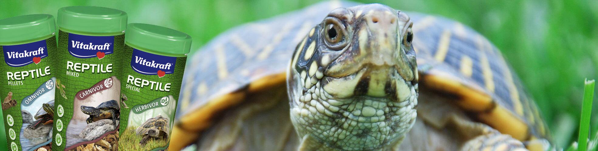 Schildkröte im Gras
